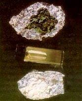 PCS (Phencyclidine)